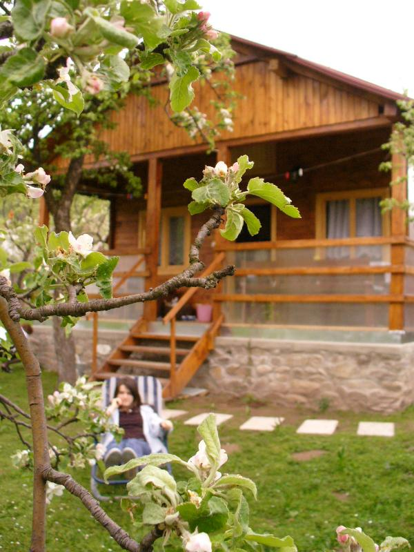 the chalet - Chalet for rent - Apuseni Mountains - Romania - rentals