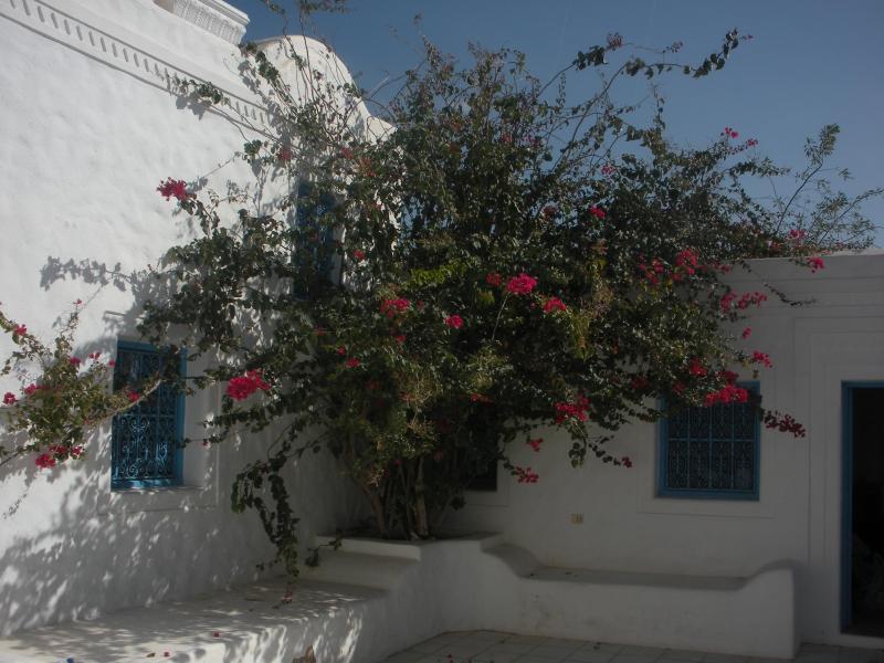 PATIO - Dar Zina - B&B to belgo-tunisian couple - Houmt Souk - rentals