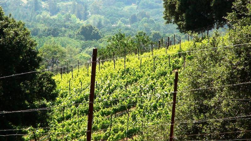 Vineyard View - Sonoma Paradise - Sonoma - rentals