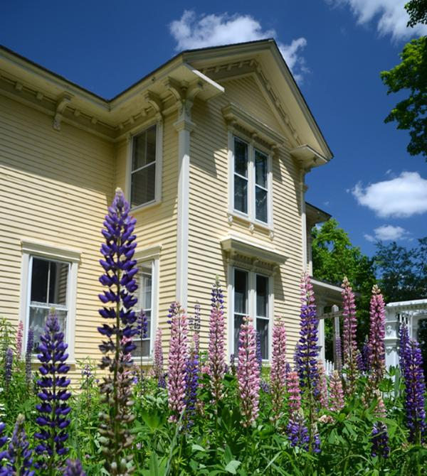 Maison Dufour - Yard with Lupines in June - Maison Dufour of Belfast, ME - Guest Suite for Two - Belfast - rentals