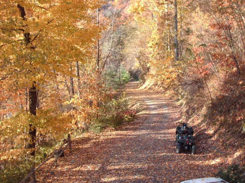 Our Driveway Dressed in the Glorious Colors of Fall - Affordable! Pets! Views! Hot Tub! 2 Fireplaces! - Maggie Valley - rentals