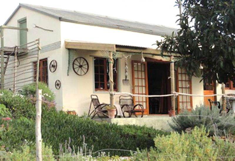 Driftwood Cottage: Quaint, cosy and secluded. More info on (website: hidden) - Driftwood Cottage - Napier - rentals