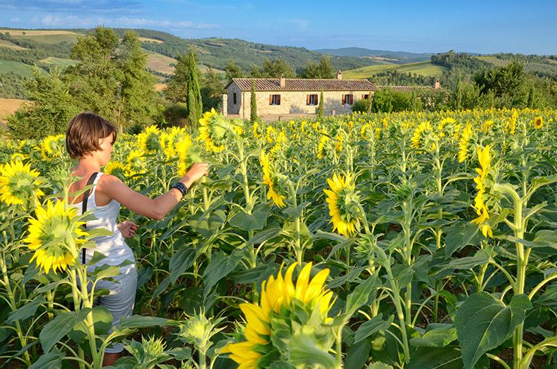View of the house from the fields - Family friendly holiday house with pool - apt4 - San Venanzo - rentals