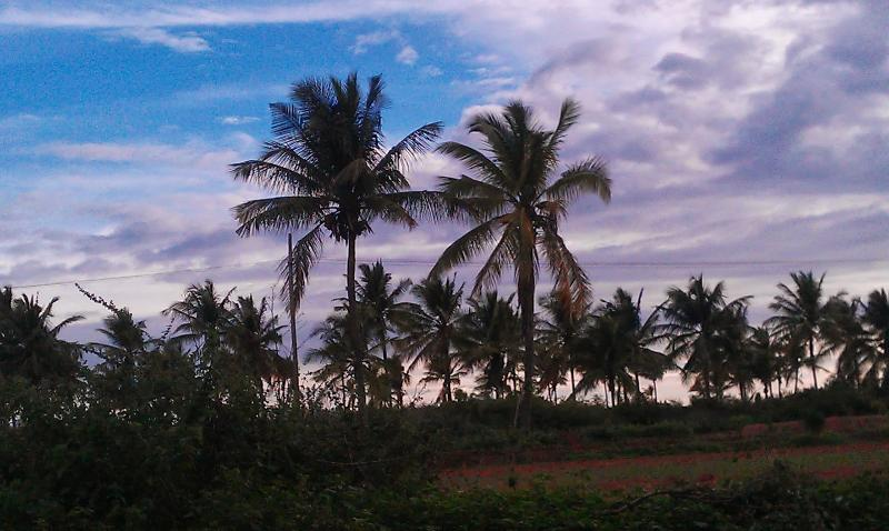 View of souroundings and farm house - Rustic cottage with amenities for a serene getaway - Karnataka - rentals