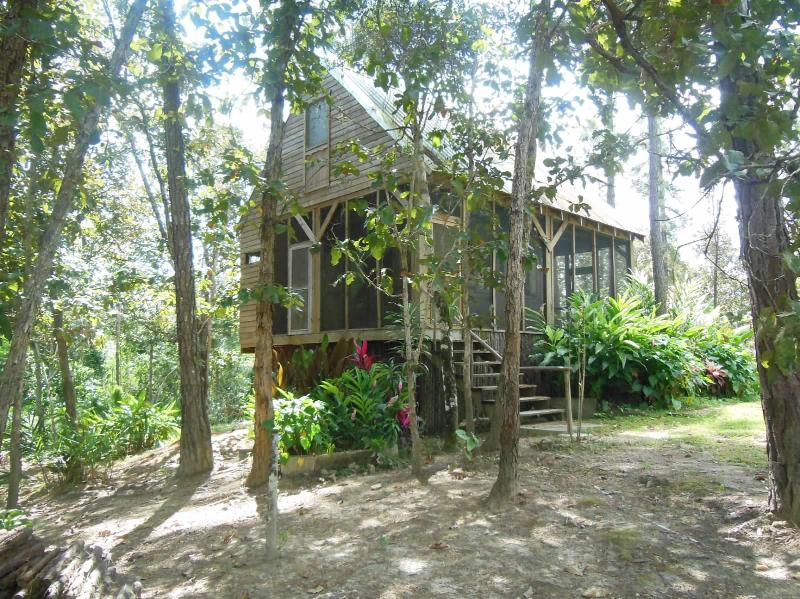 Charming jungle house in Mountain Pine Ridge - Image 1 - Mountain Pine Ridge - rentals