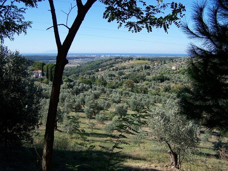 beautiful view of the sea from the large guest house - Pet and Kid Friendly Tuscan Vacation Rental - Riparbella - rentals