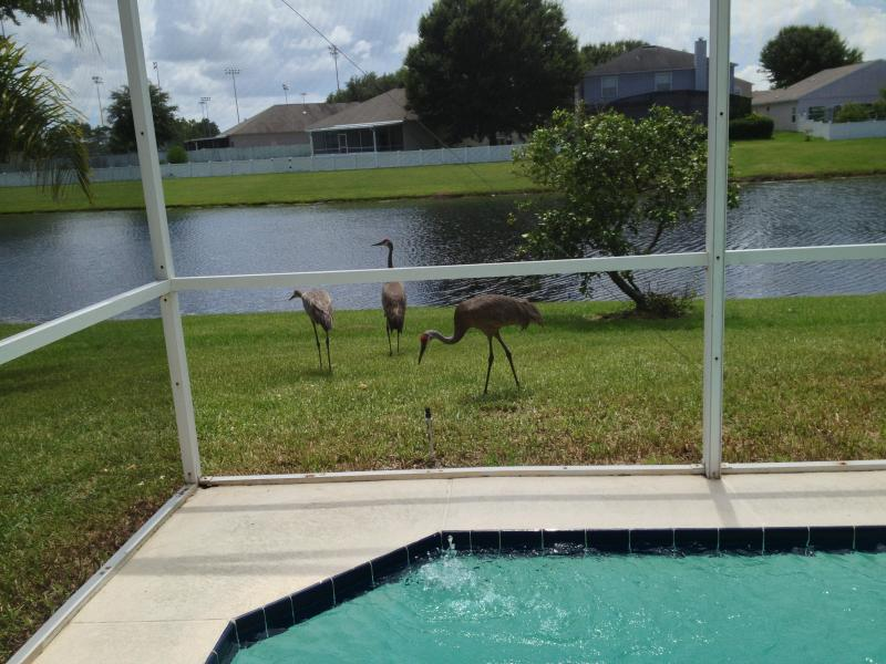 Scenes from the pool while relaxing - Beutiful Quiet House Near Parks - Apopka - rentals