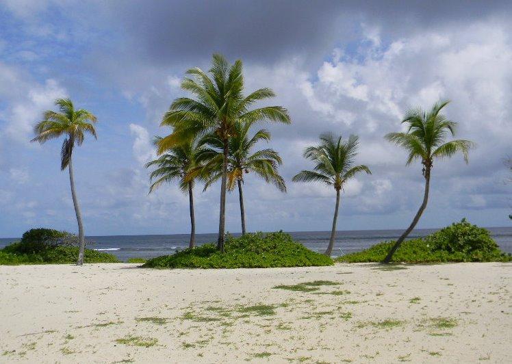 "Beautiful Pelican Cove Beach - ""Island Time"" at Pelican Cove Condos St. Croix - Saint Croix - rentals"