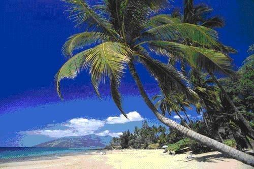 Spectacular beaches - Maui Kamaole Spectacular Oceanfront View remodeled - Kihei - rentals
