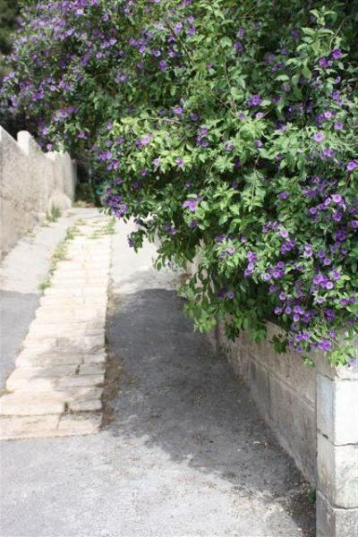 The entrance - Beautiful Studio near the Old City - Jerusalem - rentals