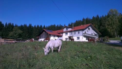 LLAG Luxury Vacation Apartment in Achslach - 807 sqft, comfortable, nice view, beautiful (# 4477) #4477 - LLAG Luxury Vacation Apartment in Achslach - 807 sqft, comfortable, nice view, beautiful (# 4477) - Achslach - rentals