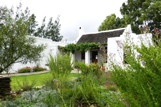 Wild Almond from the garden - Wild Almond,A Petite Country Cottage In McGregor - McGregor - rentals