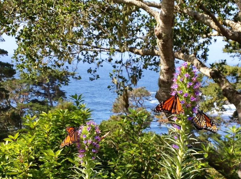 Welcome to Peace Cove... - Relax at Peace Cove in The Carmel Highlands! - Carmel - rentals
