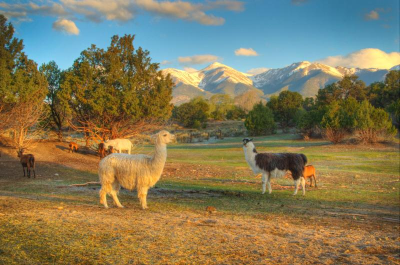Views from the lodge - Mountain Goat Lodge Goat Farm - Salida - rentals