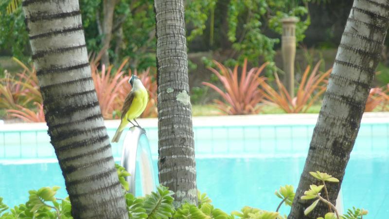 Piscina do condominio - Casa Andrea - Ipioca Maceio-AL Brazil - Maceio - rentals