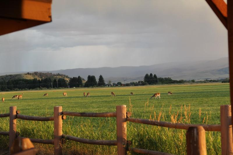 Relaxation, Wildlife, and the Madison River - Image 1 - Ennis - rentals