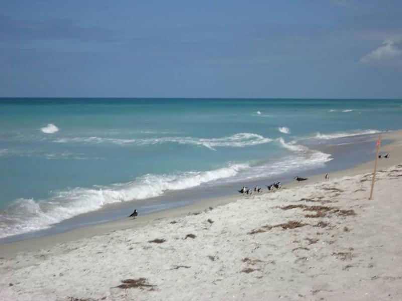 Beachfront! - Longboat Key Beachfront Las Hermanas/Starfish #2 - Longboat Key - rentals