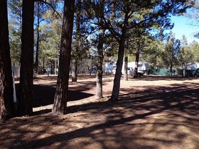 Pine Forest RV Park- (RV & Travel Trailer Parking) - Image 1 - Arizona - rentals