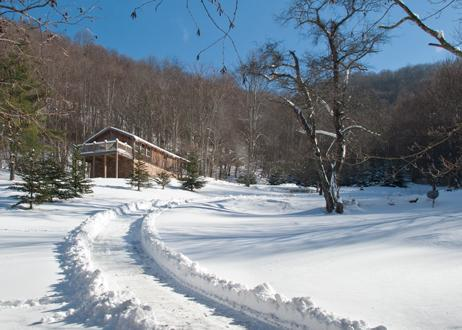 Winter at Big Bird - BIRDTOWN GUESTHOUSE (PRICE INCLUDES TAXES) 60ACRES - Bakersville - rentals