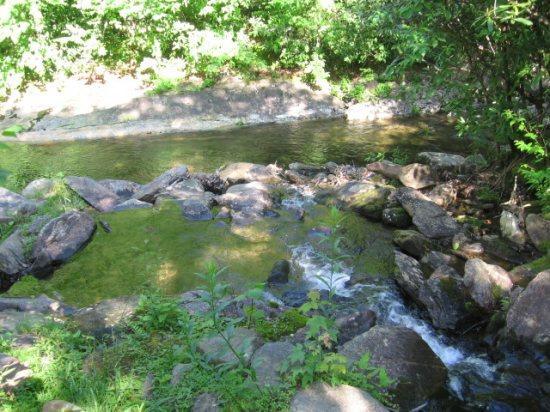 Rock Creek 10 feet from back door! - Cabin At Rock Creek,Surrounded by Nature & Solitude - Burnsville - rentals