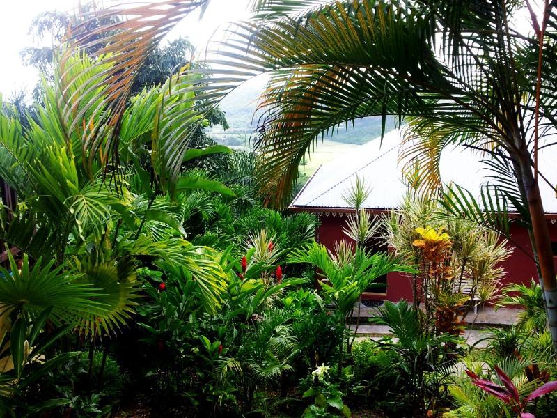 jardin tropical - Les Bougainvillees - Le Marin - rentals