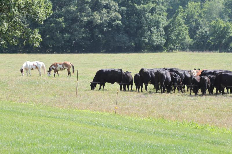 Horses and Cows Graze in the Pasture - Beautiful Farm House Near the Natchez Trace - Summertown - rentals