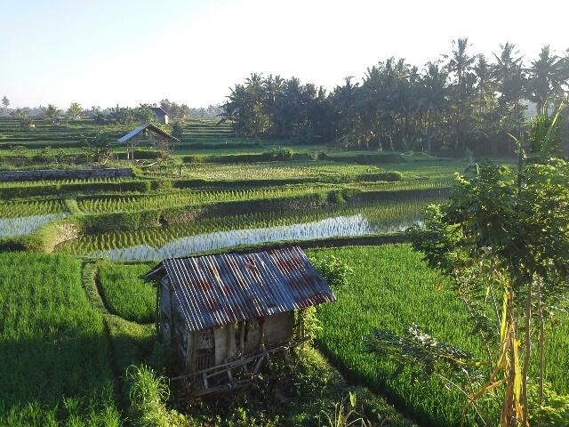 View to the North-lush green - Villa Santana: New Luxury 3BR, easy walk to Ubud - Ubud - rentals