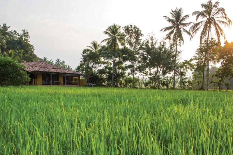 Paddy House - Image 1 - Unawatuna - rentals