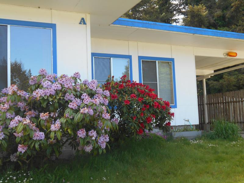 Rhododendron flowers right out the front windows. - Spacious suite on the coast. A - Coos Bay - rentals