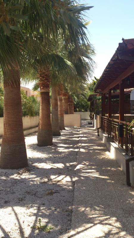 Shared garden at the front entrance filled with palm trees! - Spacious flat, wonderful location - Larnaca District - rentals