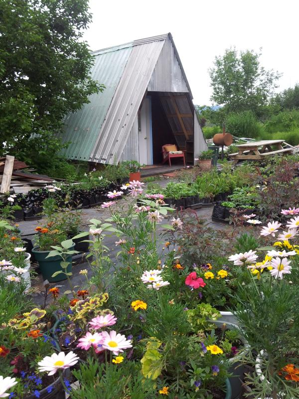A-Frame in perrenial nursery - Charming A-Frame - Homer - rentals