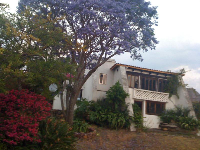 Jacaranda trees bloom during Semana Santa - Dia de los Muertos on Lake Patzcuaro - Patzcuaro - rentals