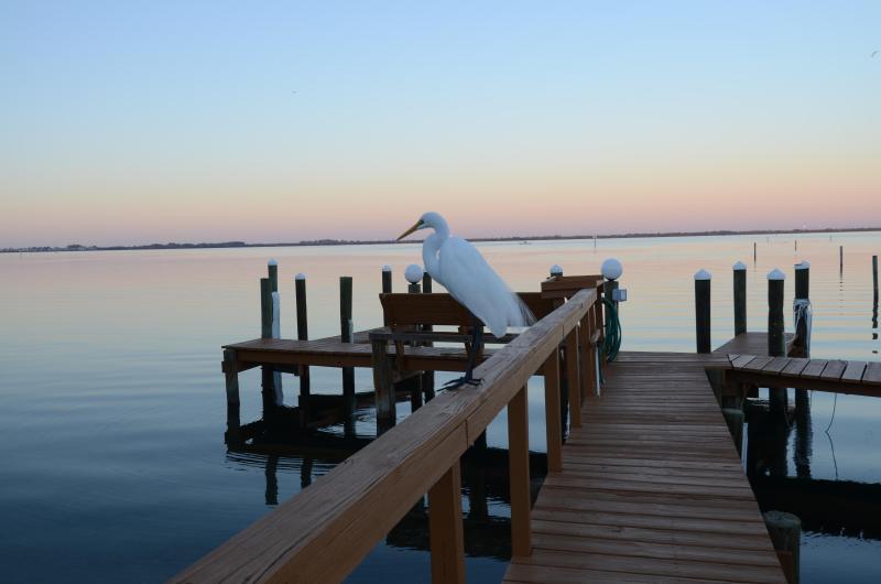 Night Watchmen still on Duty - LongBoat Key Water Front /Bay View Condo Remodeled - Longboat Key - rentals