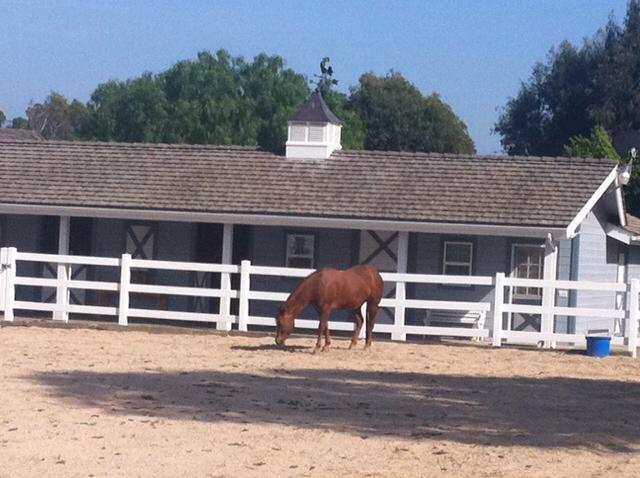 Stonehaven Farm Barn - Equestrian community close to Disney - Orange - rentals