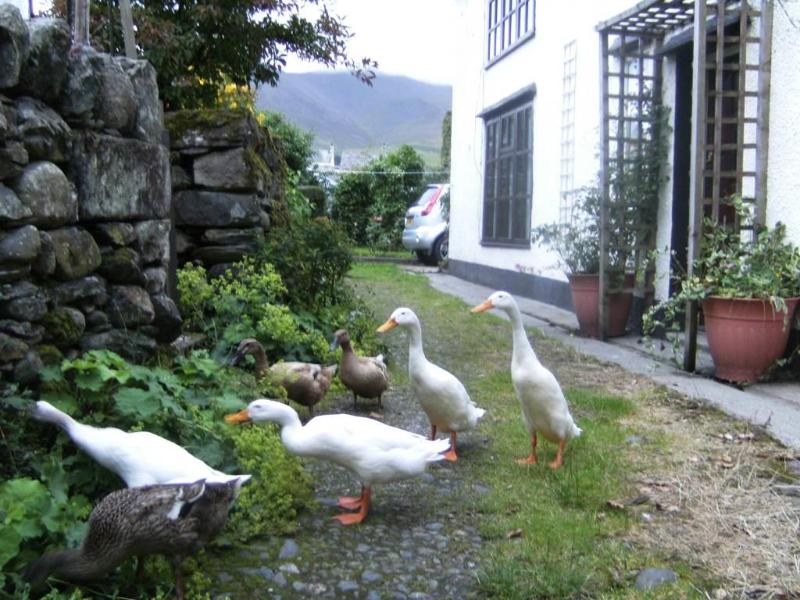 The Puddle Ducks - Puddle Duck Cottage, log fire, village nr Keswick - Keswick - rentals