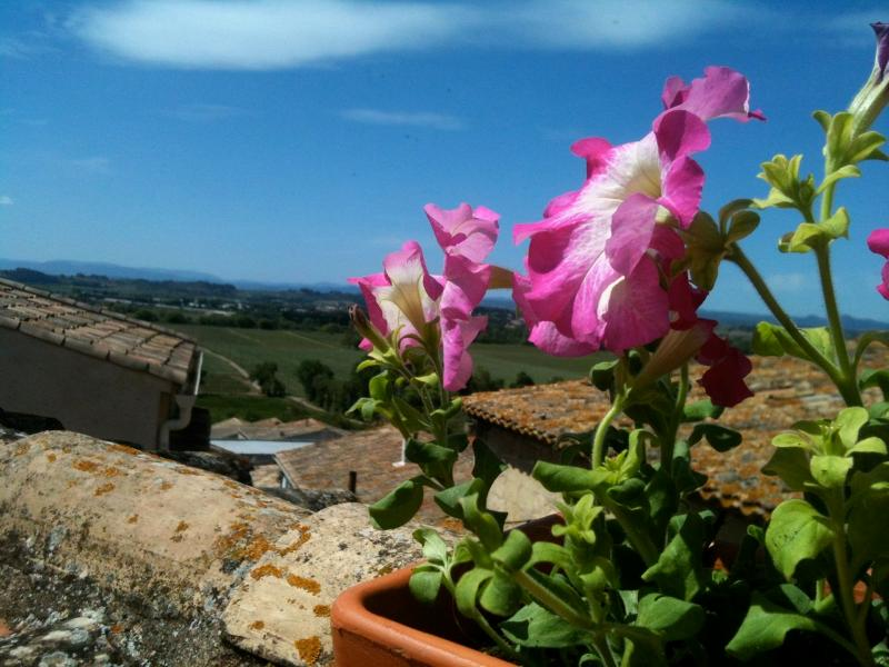 view from the terrasse - French Mediterranean Village House w  Roof Terrace - Pezenas - rentals