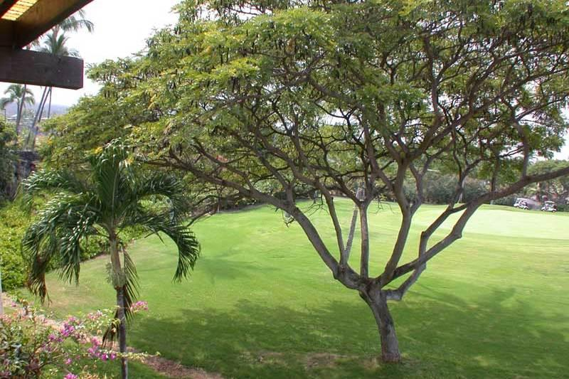 Kona Coast Resort, Condo 2-203 - Image 1 - Kailua-Kona - rentals