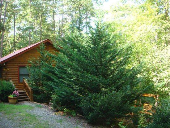 OUTSIDE OF CABIN - BEAR HUG CABIN- 2BR/1BA- CABIN SLEEPS 4, LOCATED WITHIN WALKING DISTANCE OF CHERRY LAKE AND THE BENTON MACKAY TRAIL! 14FT MAD RIVER CANOE, WIFI, WOOD BURNING FIREPLACE, CHARCOAL GRILL, PAVED ACCESS! ONLY $99 A NIGHT! - Blue Ridge - rentals