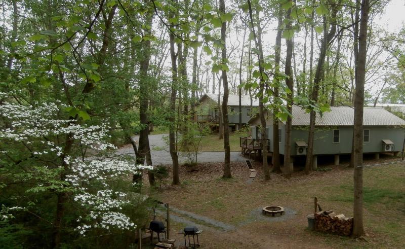 Hidden Cottages - Image 1 - Johnson City - rentals