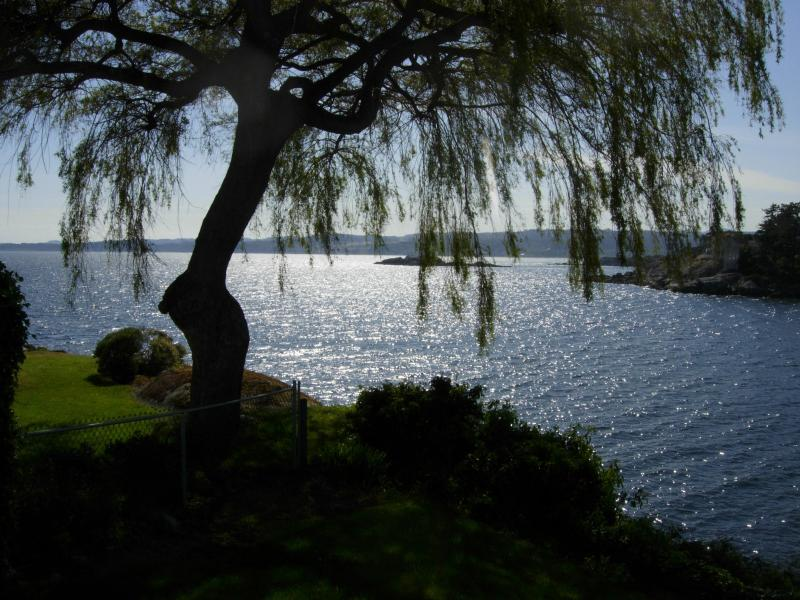 View of Juan De Fuca Strait framed by the Willow Tree -  from the Front Yard - Constance Cottage - Victoria - rentals