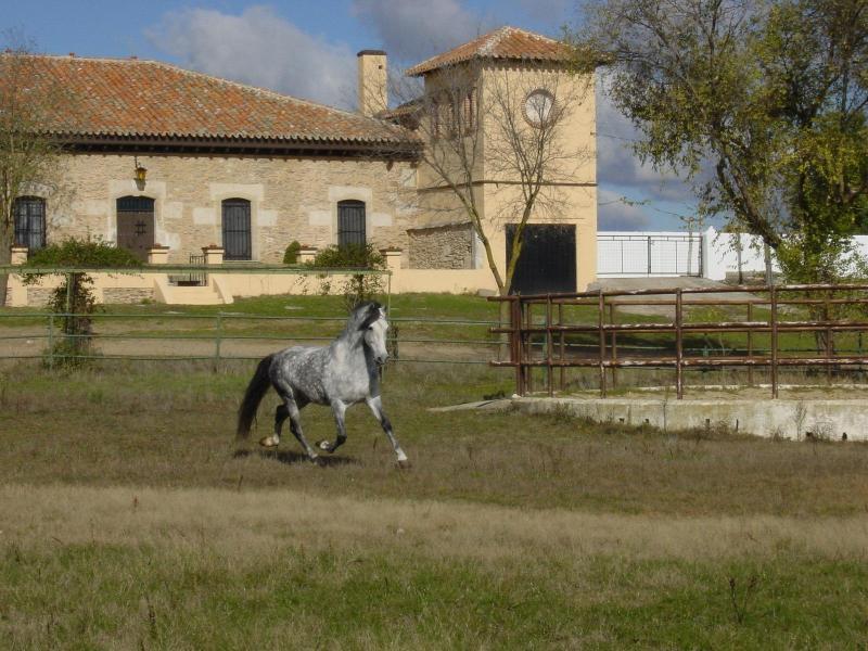Villa at Farmland - Image 1 - Salamanca - rentals