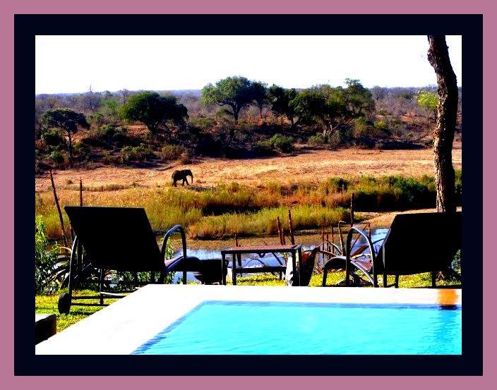 Infinity Pool in Big 5 Territory - Hippo Hills - Kruger National Park Boundary - Kruger National Park - rentals