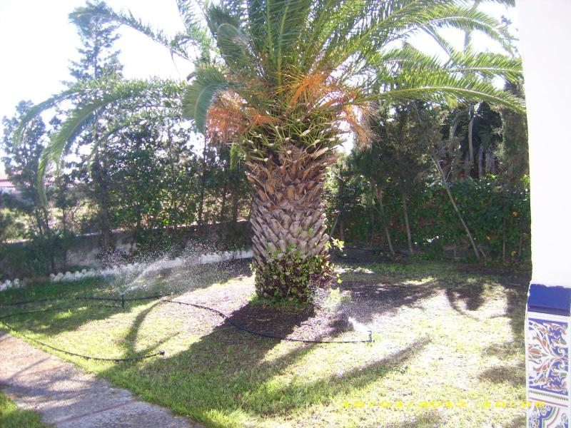 Garden view - 5 minutes walk from beach spacious house for rent - Chipiona - rentals