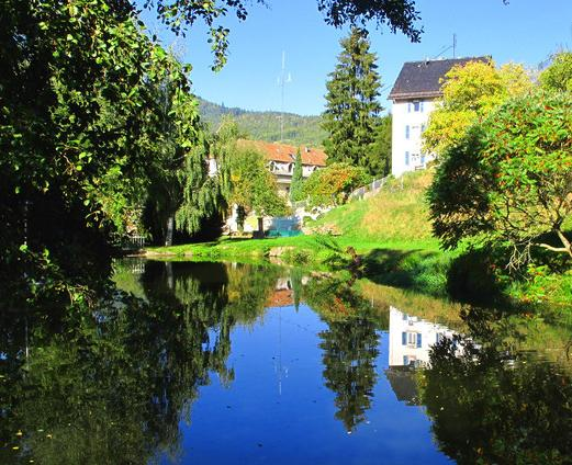 Maison Bellevue-Munster-Alsace - Maison Bellevue apartments, free wifi and parking, - Munster - rentals