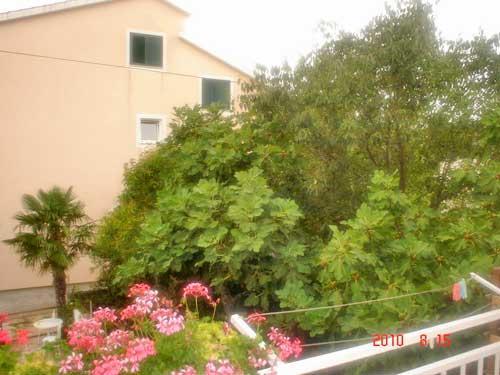Apartments Ante - 11391-A3 - Image 1 - Vodice - rentals