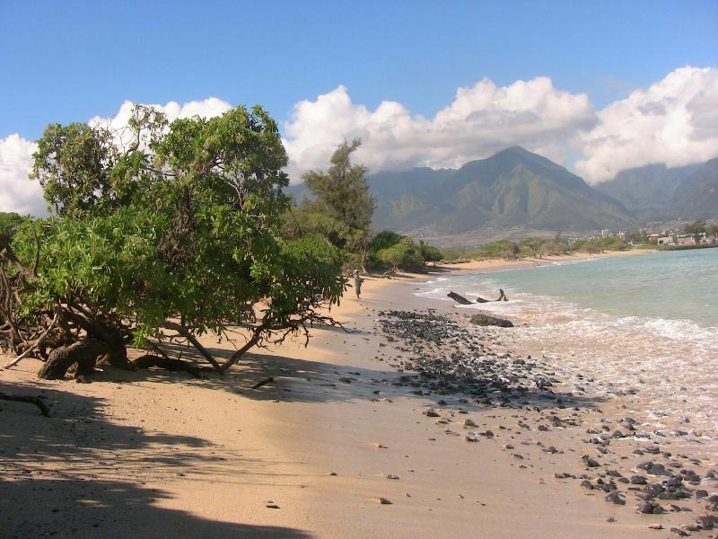 Carriage house - Kanaha beach - Image 1 - Paia - rentals