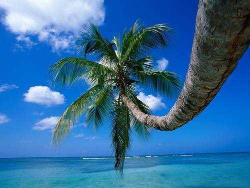 Beach Across the street - Aloha Hawaii - Hickory Corners - rentals