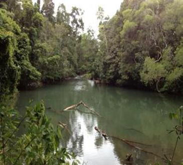 private river to swim and explore on the property - Figtree Getaway self contained cabin in Rainforest - Malanda - rentals