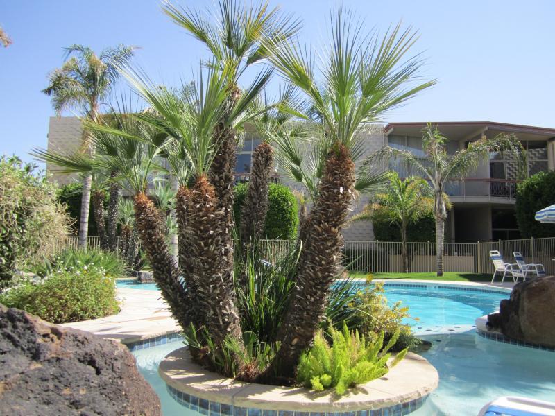 The Pool Area - Mid Century Modern Apartment in Central Phoenix - Phoenix - rentals