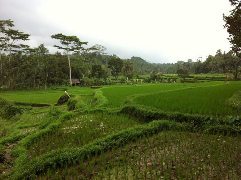 villa view - Villa Kelusa - Ubud - rentals